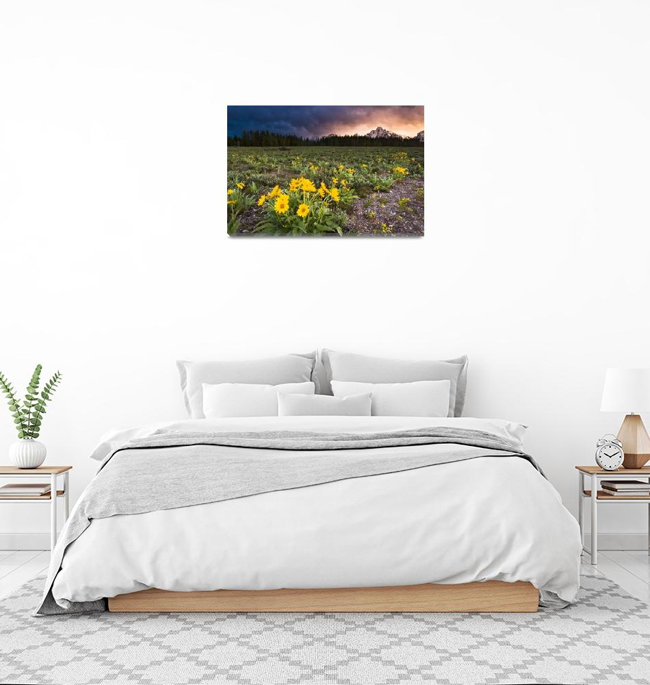 """""""Balsamroot Wildflowers and Stormy Sunset""""  (2011) by cavaroc"""