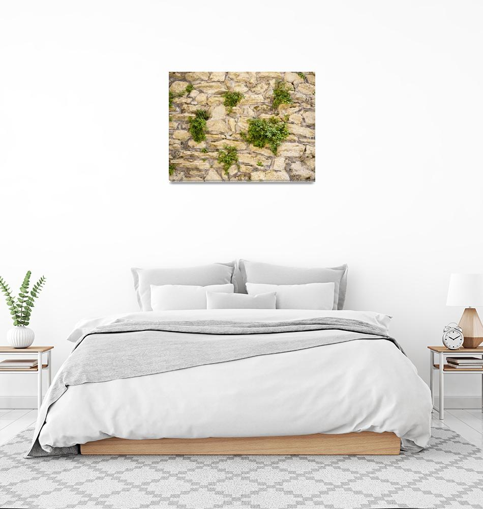 """Wall of Plants""  (2015) by raetucker"