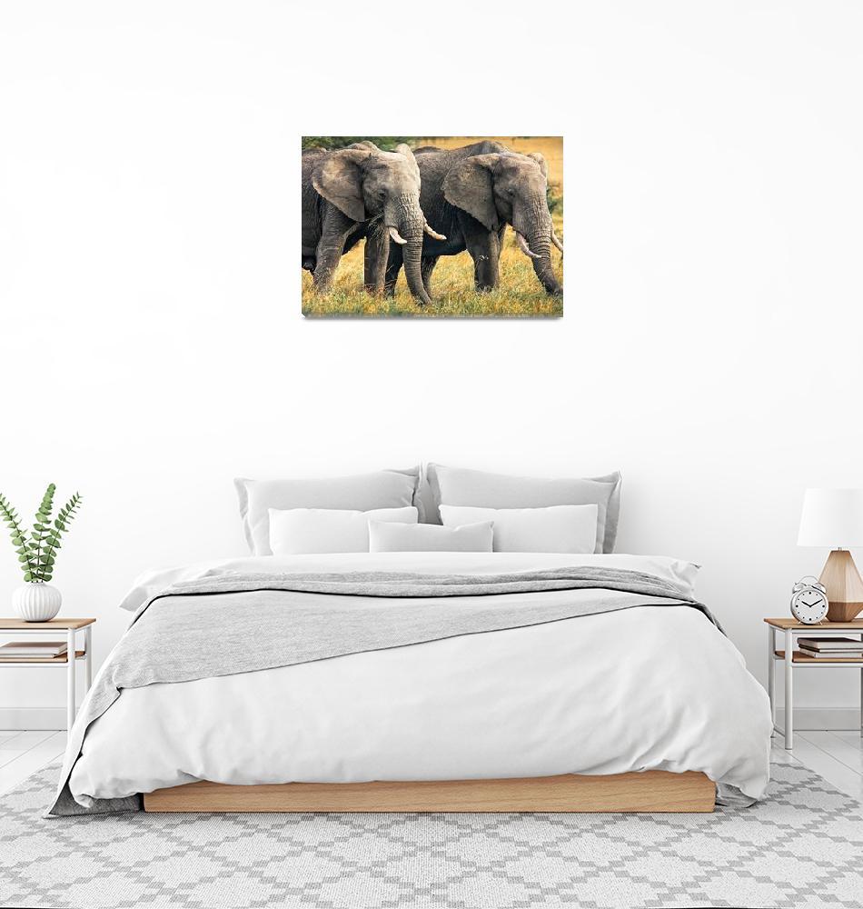 """Elephants of the Masai Mara""  (2012) by mjphoto-graphics"