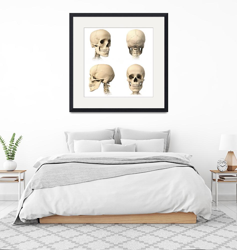 """Anatomy of human skull from different angles""  by stocktrekimages"