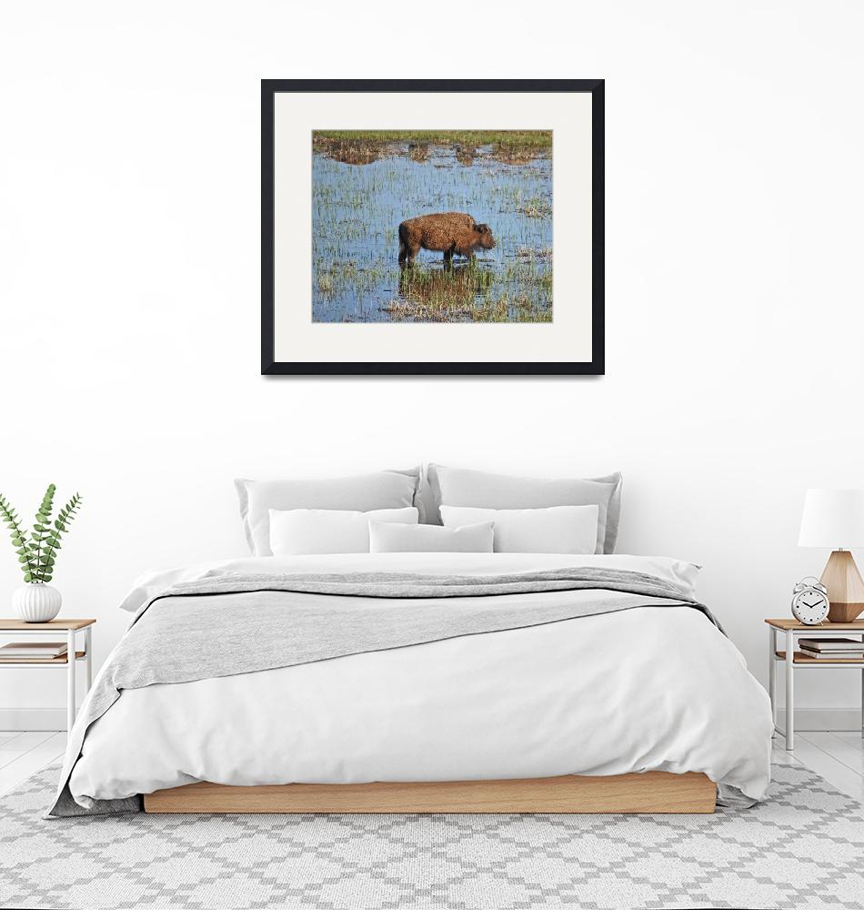"""""""Bison and friends""""  (2009) by EclecticNature"""