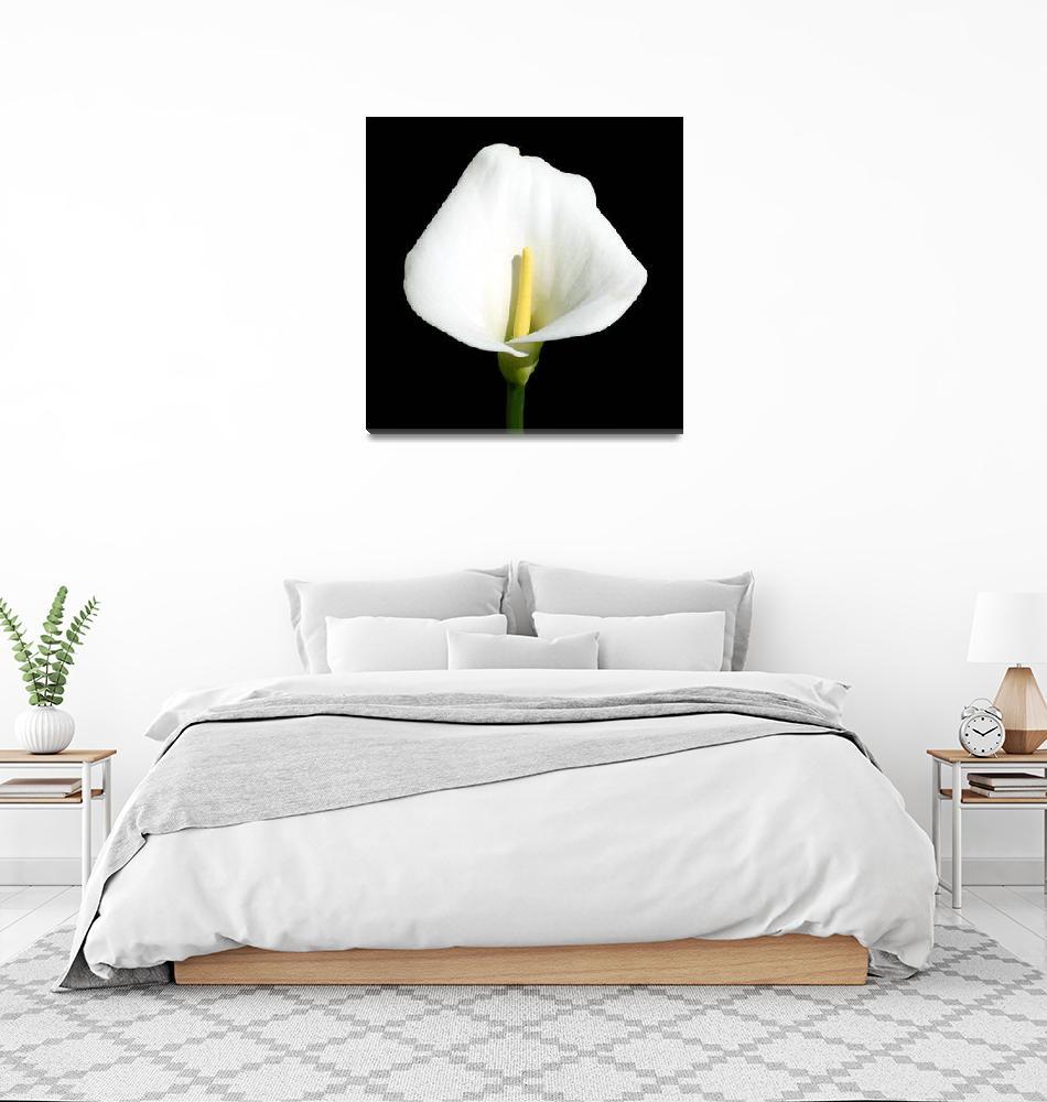 """Flower 160c White Floral Spring Macro""  (2010) by Ricardos"