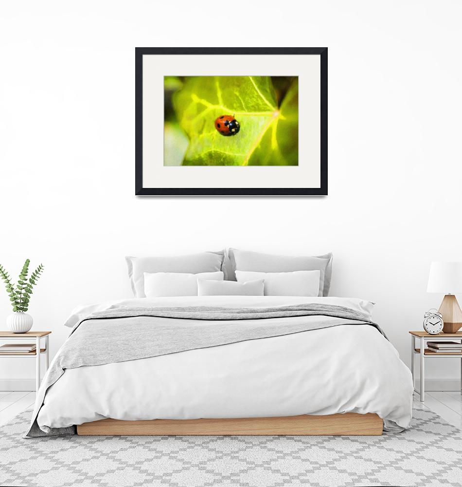 """""""Lady Bug_All The Colour 072_Artistic Touch 01""""  by DesignerArtPrints"""