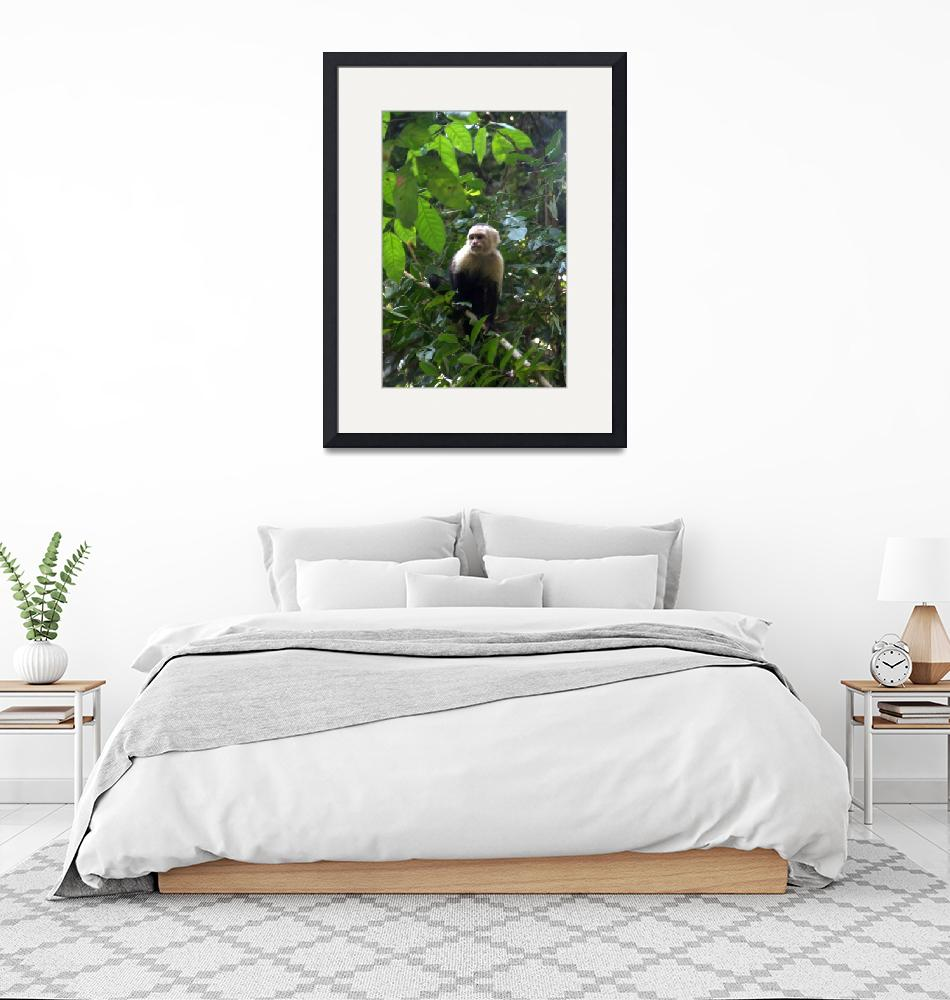 """Wild Capuchin Monkey""  by Eileen"