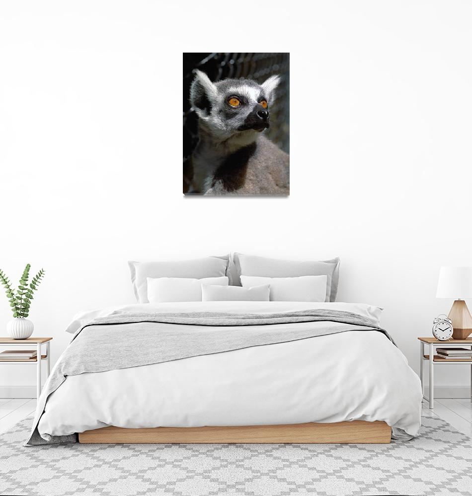 """Lemur Eyes""  (2009) by buffaloworks"