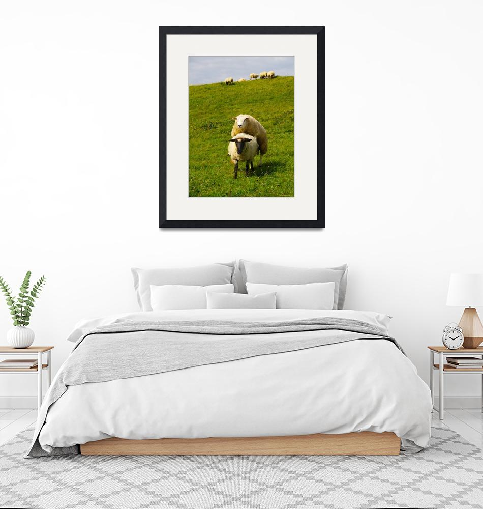 """mating sheep""  (2009) by derausdo"