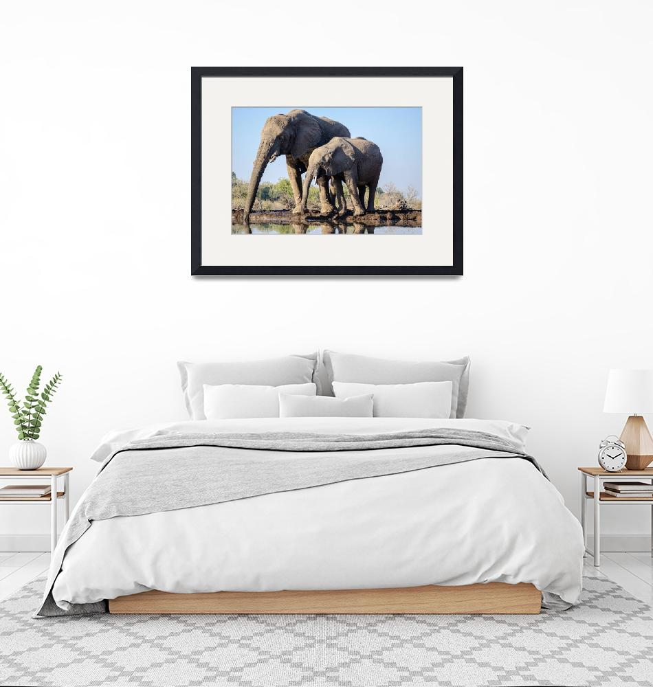 """""""Elephant Family Drinking by Water w/ Reflection""""  (2019) by JPRVenturesLLC"""