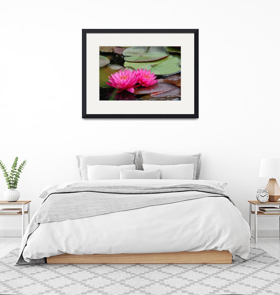 """""""2 Pink Water Lillies""""  (2010) by WendyAmbersonImages"""