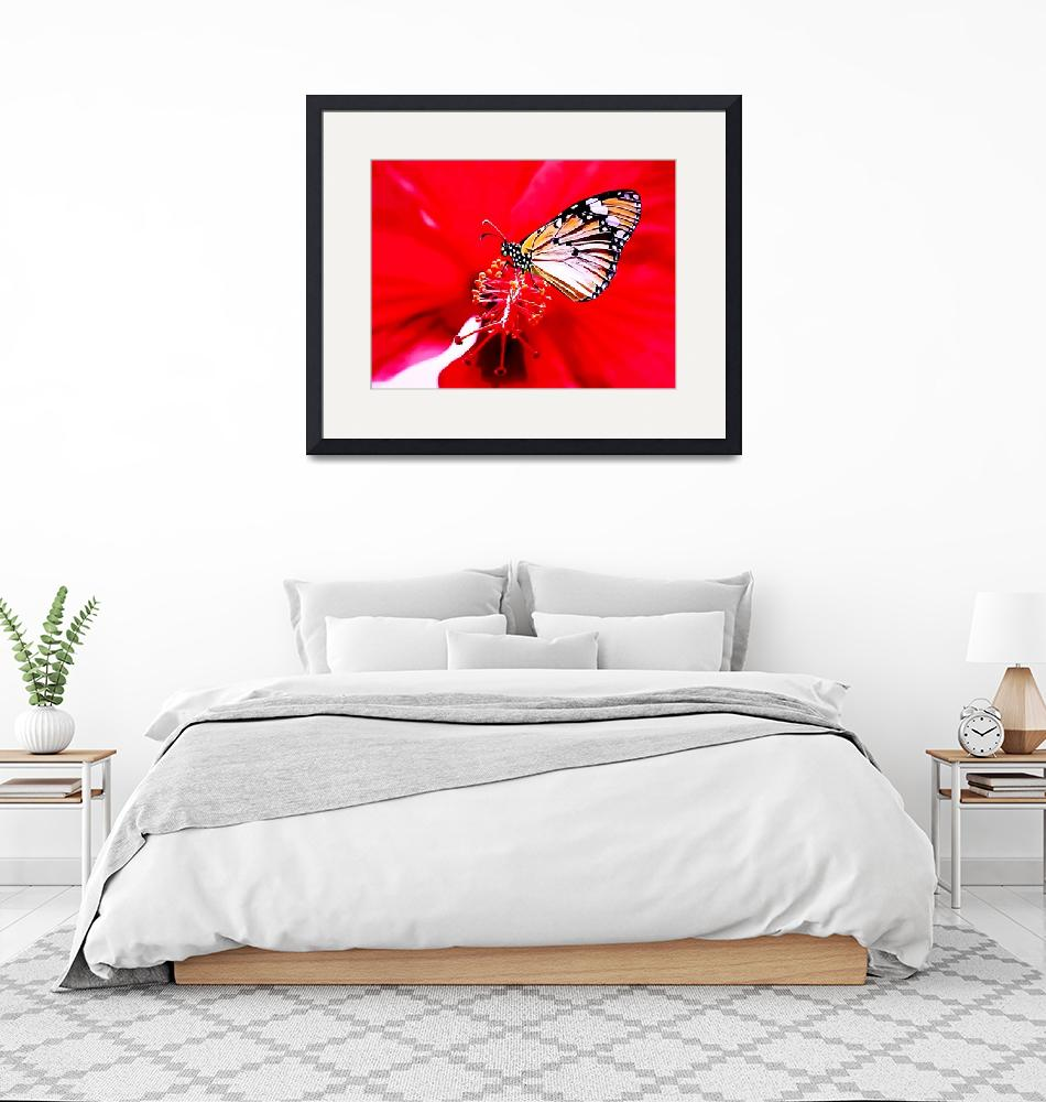 """""""Red Flower @ Butterfly""""  (2016) by pgresham"""