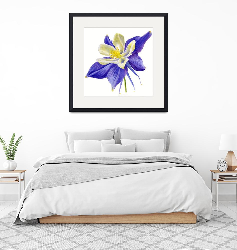 """Single Blue Columbine Flower""  (2015) by Pacific-NW-Watercolors"