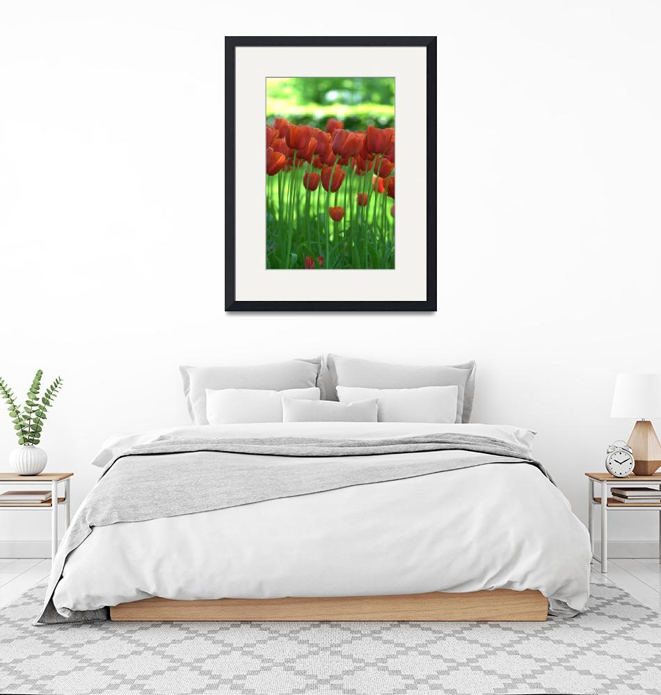 """Red Tulips of Amsterdam""  (2008) by ebriscoe"