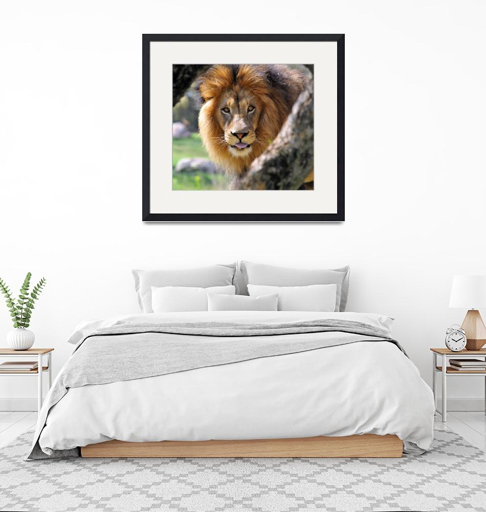 """""""A Lion Day""""  by NaturePlusStudios"""