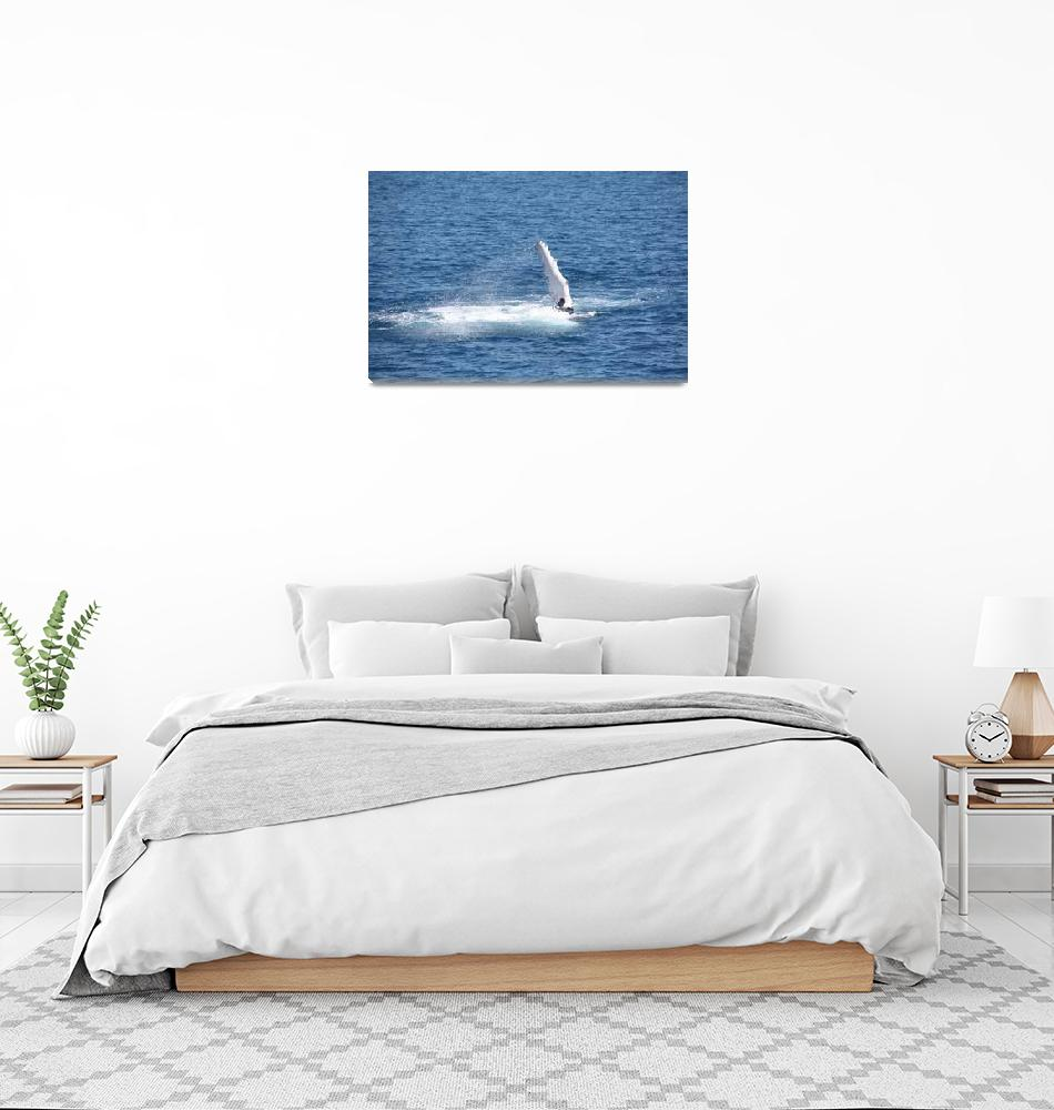 """""""NaP_ Whale Watching105""""  by nevilleprosser"""