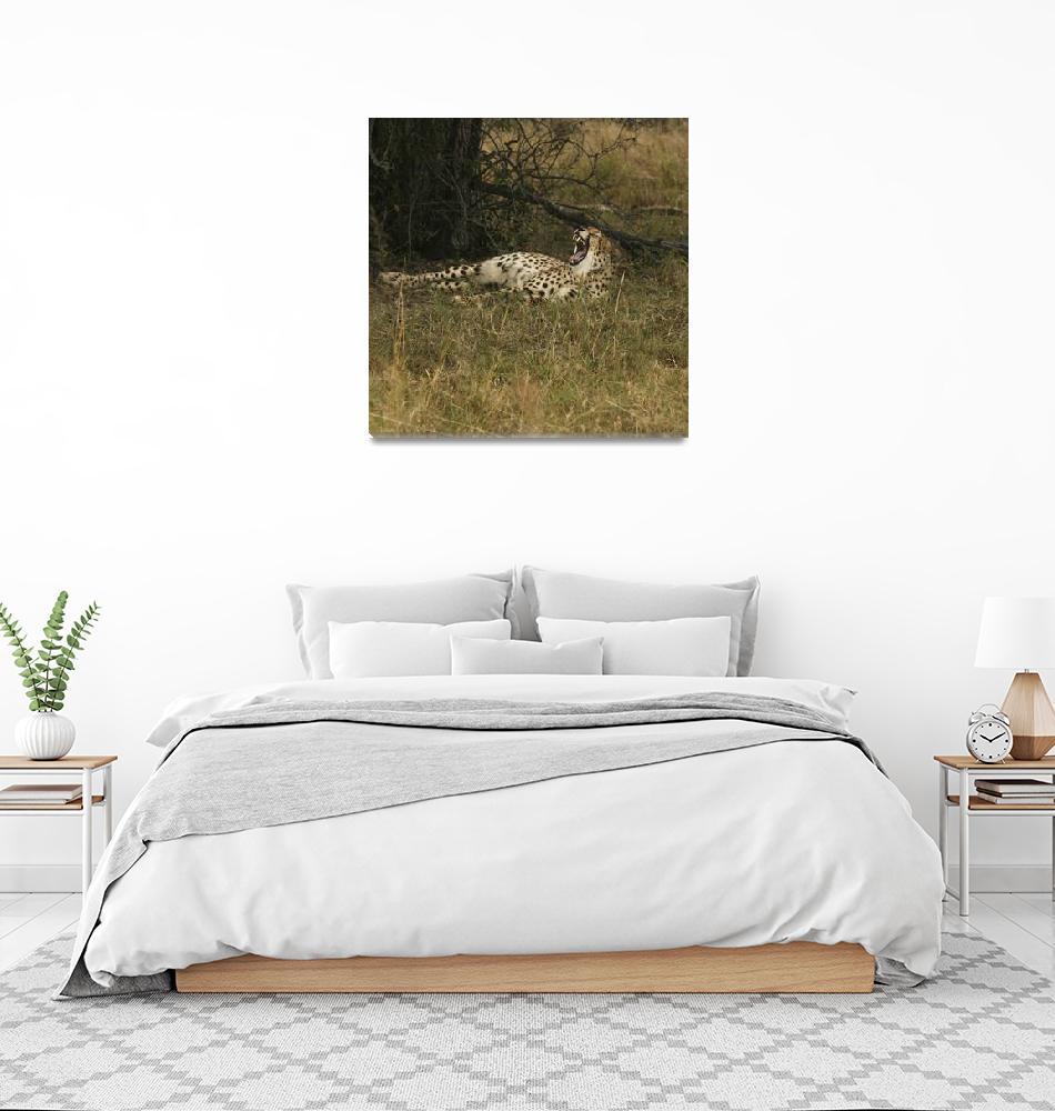 """""""Yawning Cheetah""""  by KarenZukRosenblatt"""