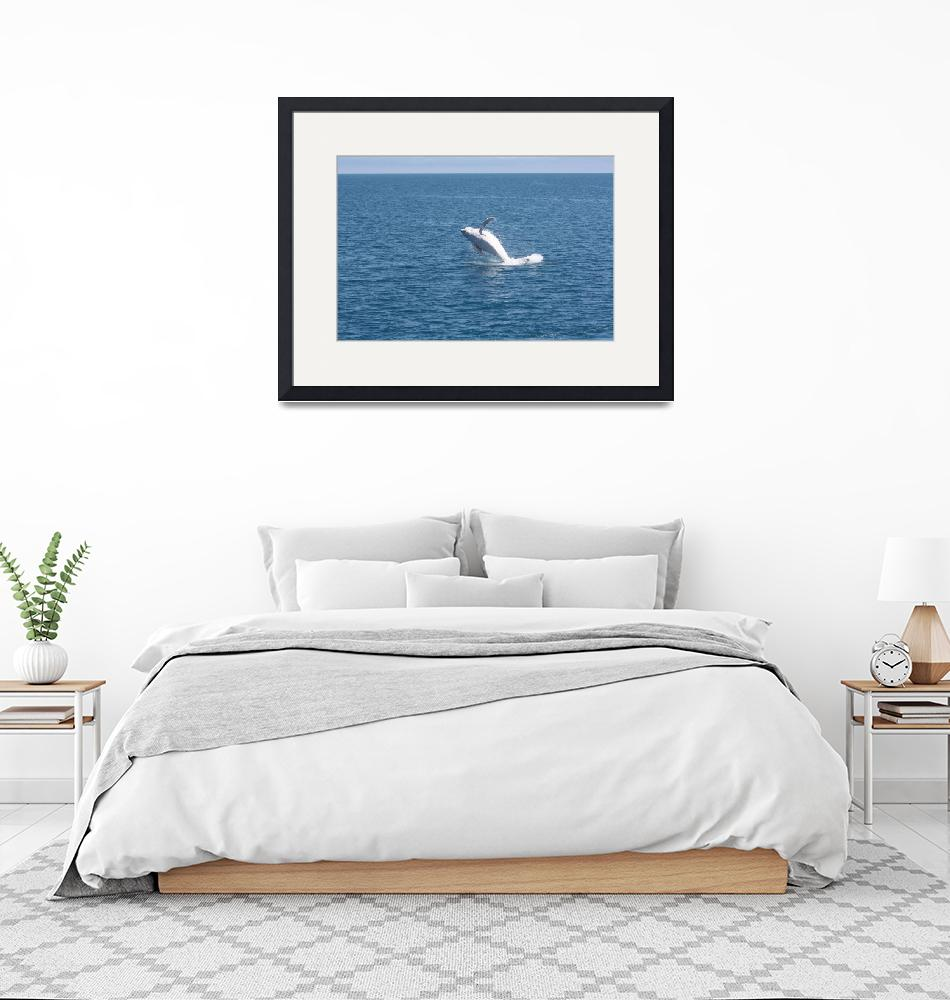 """""""NaP_ Whale Watching022""""  by nevilleprosser"""
