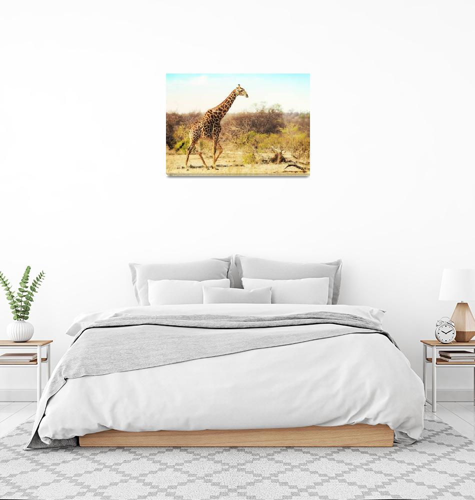 """Zebra Walkng Through African Savanna""  by ADogsLifePhoto"