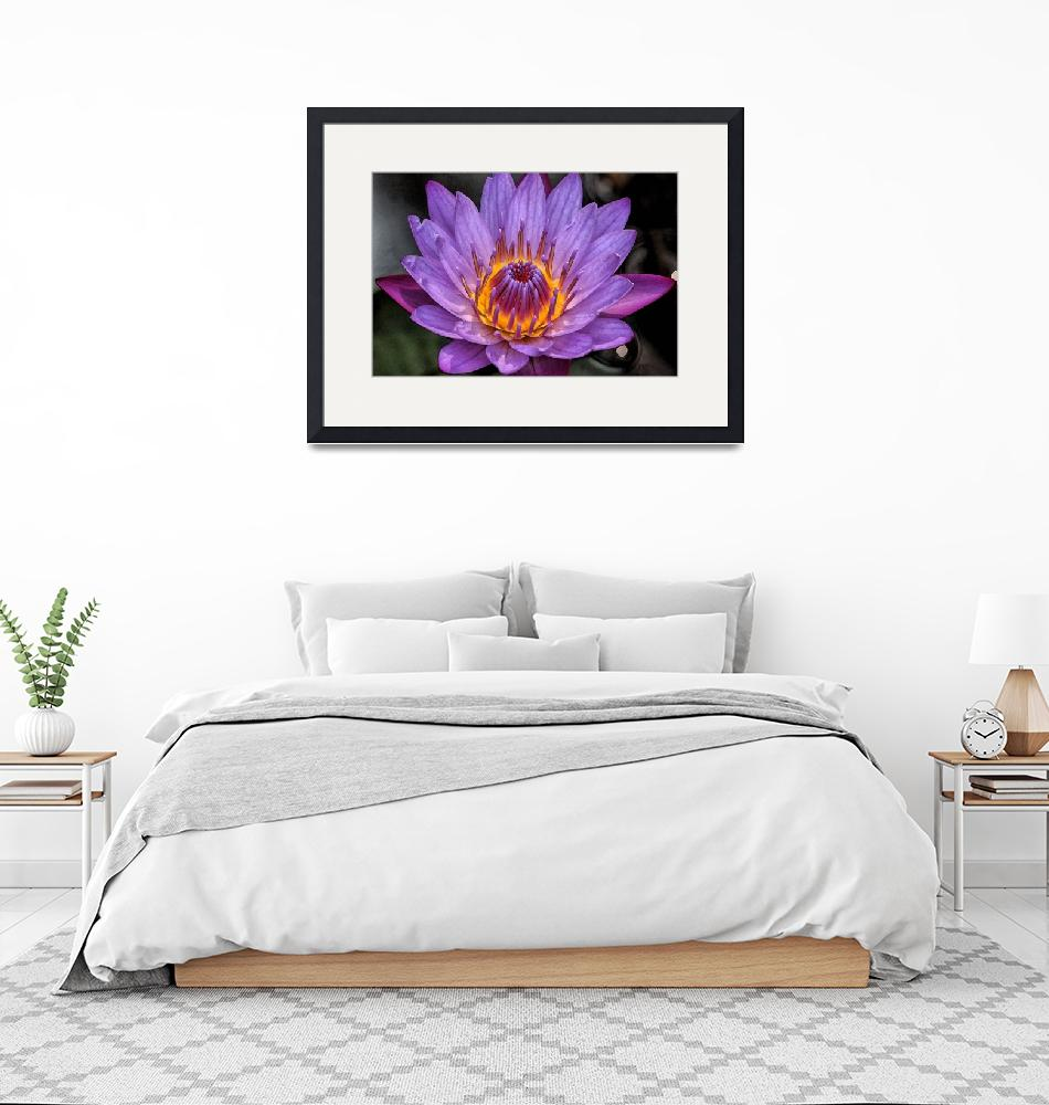 """""""Water Lily""""  (2017) by SivamDesign"""