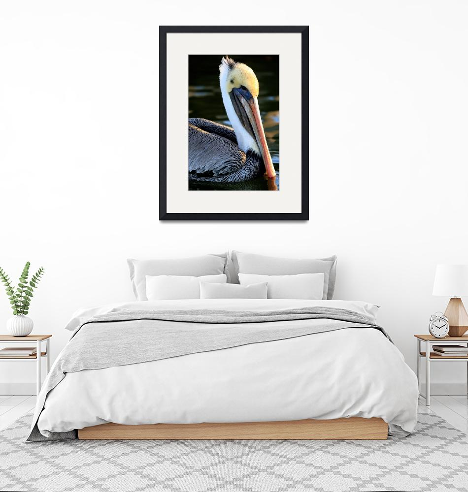 """""""Pelican Swimming in the Sea""""  (2010) by JessicaShellPhotography"""