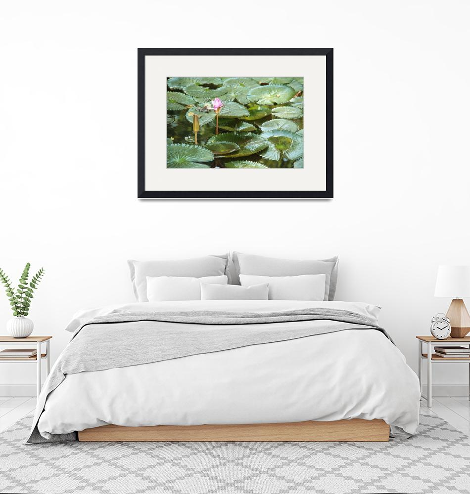 """""""lily pad"""" by stephcollier"""