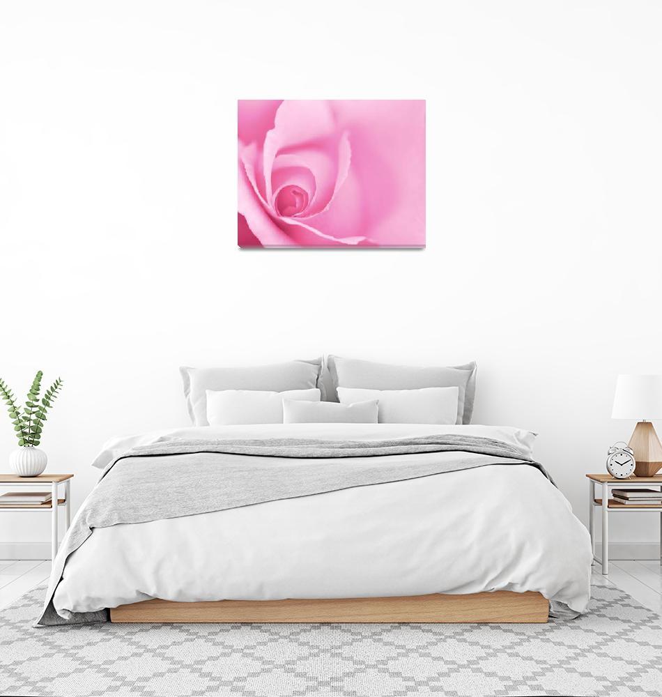 """""""Pale Pink Rose""""  (2012) by NatalieKinnear"""