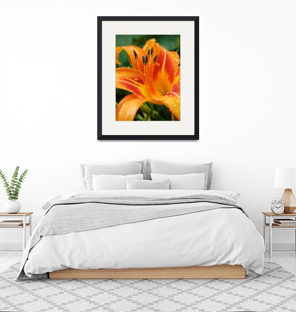 """Day Lily""  (2009) by georgejonesgallery"