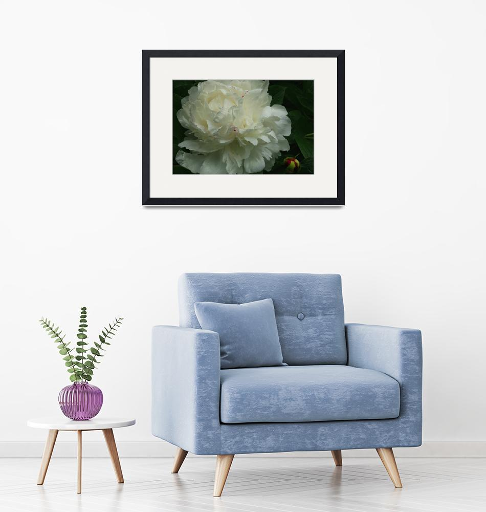 """""""White Peony on a Rainy Day""""  (2012) by newimage"""