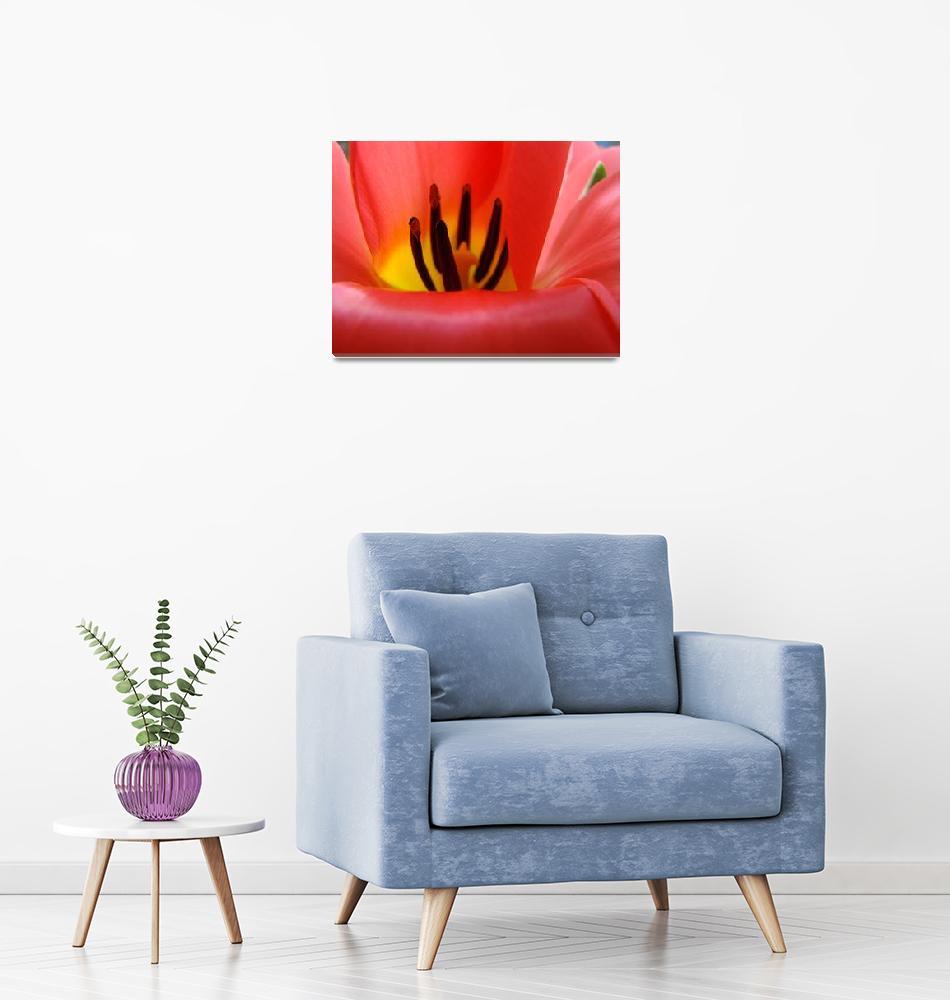 """Red Tulip Flower Macro art print Baslee Troutman""  (2010) by BasleeTroutman"