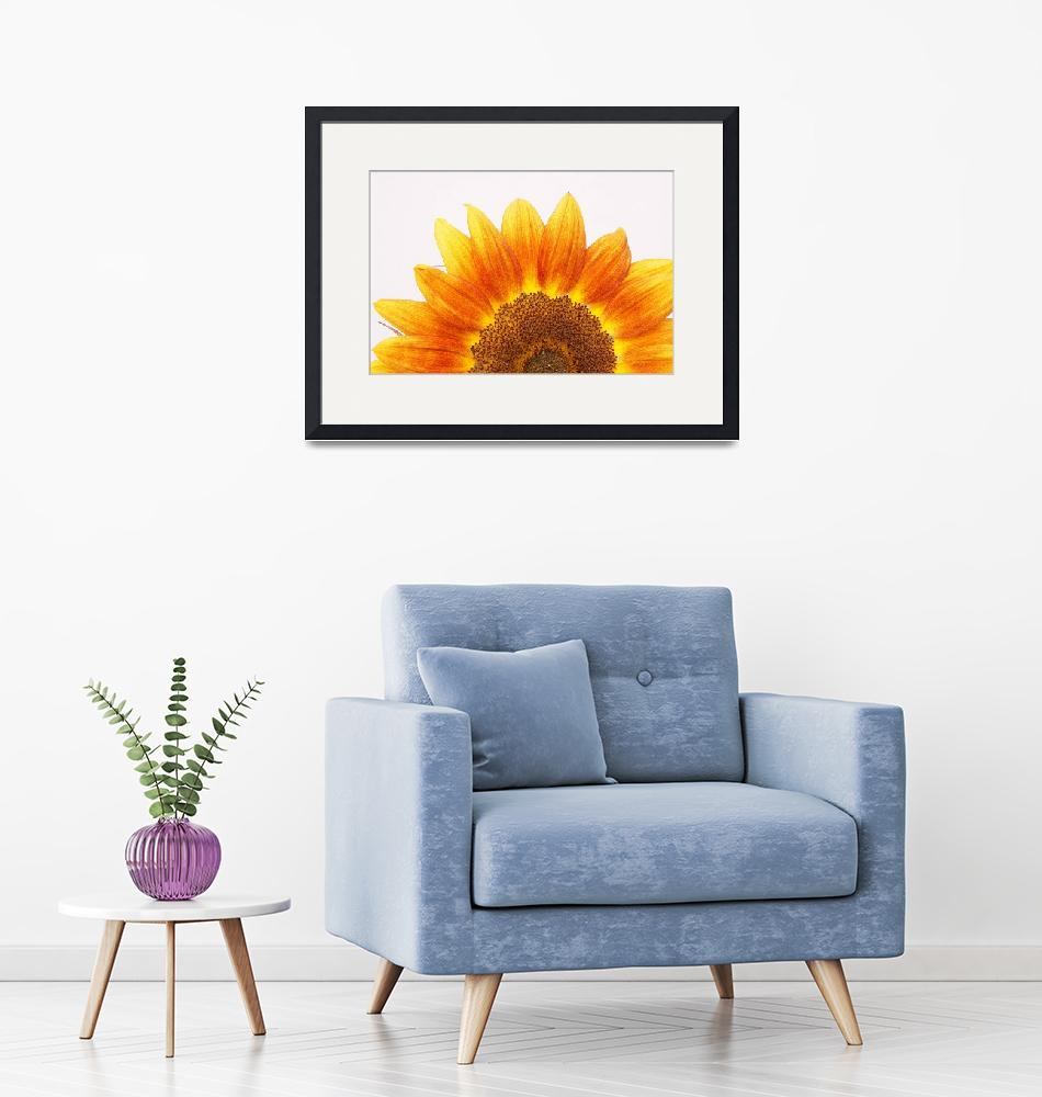 """SUNFLOWER 4""  by peppe"
