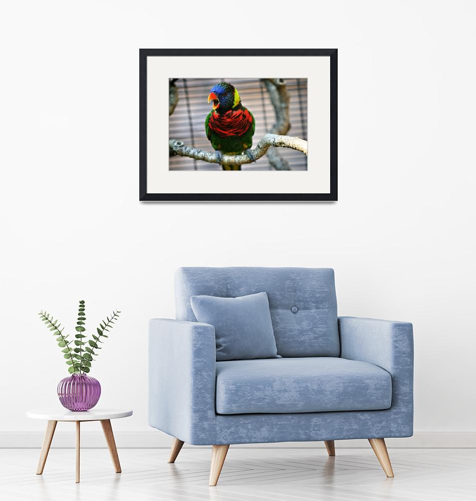 """Singing Lorikeet""  by franklinphotography"