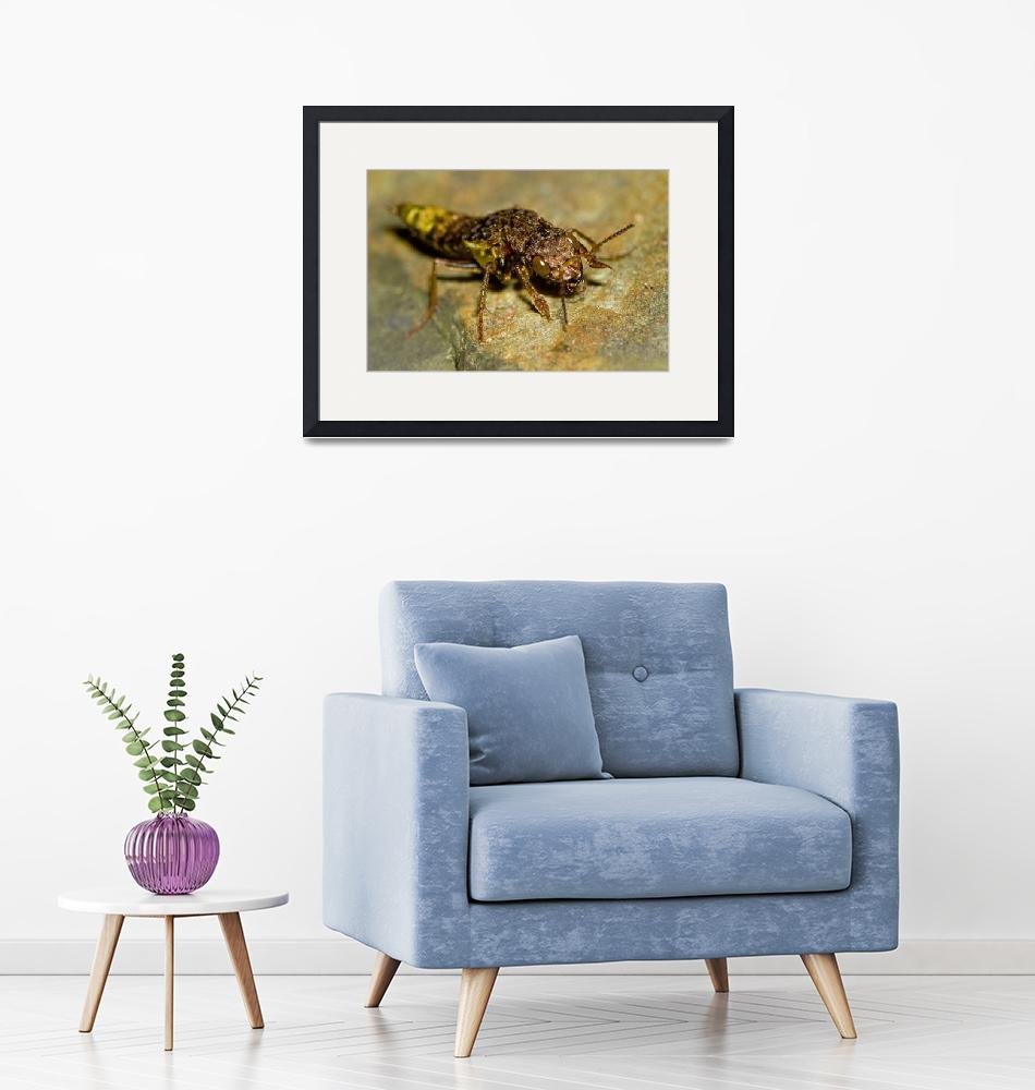 """Gold & Brown Rove Beetle""  by WorldDesign"
