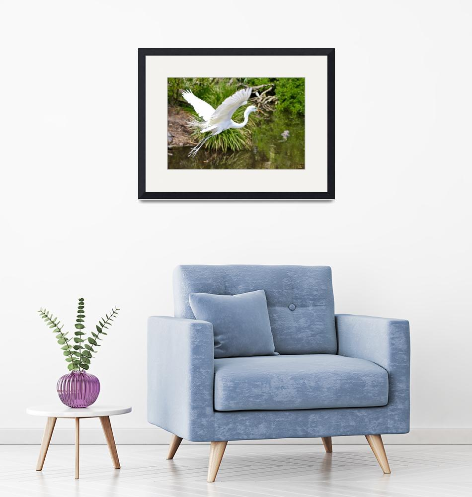 """""""Great Egret over the Swamp"""" by richbutlerphotos"""