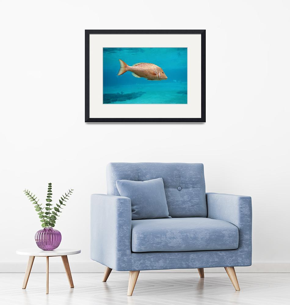 """""""Orange Fish Turquoise Water""""  (2018) by Meliphotopia"""