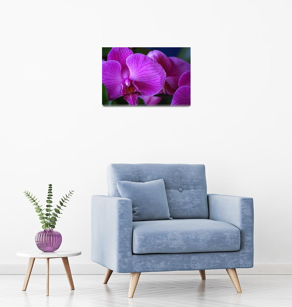 """""""Purple Orchids""""  (2008) by sharriger"""