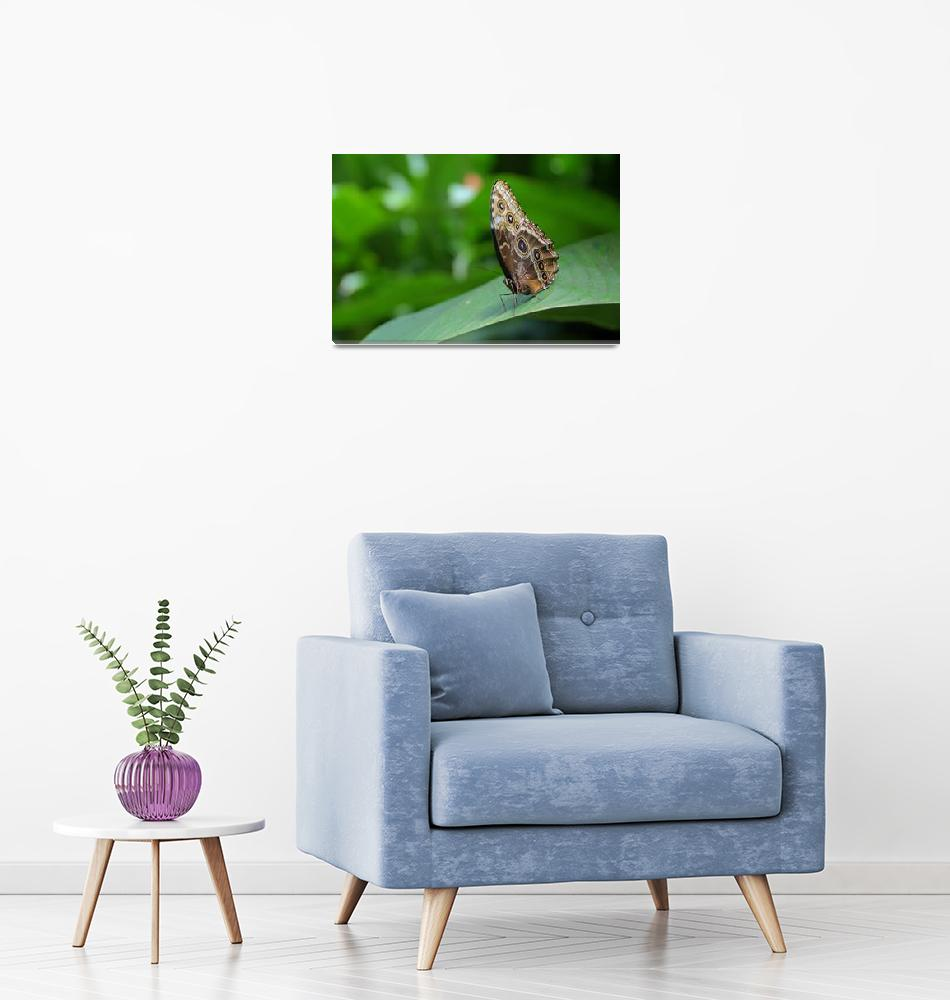 """""""Butterfly and Green""""  (2011) by b_r1s1n9"""