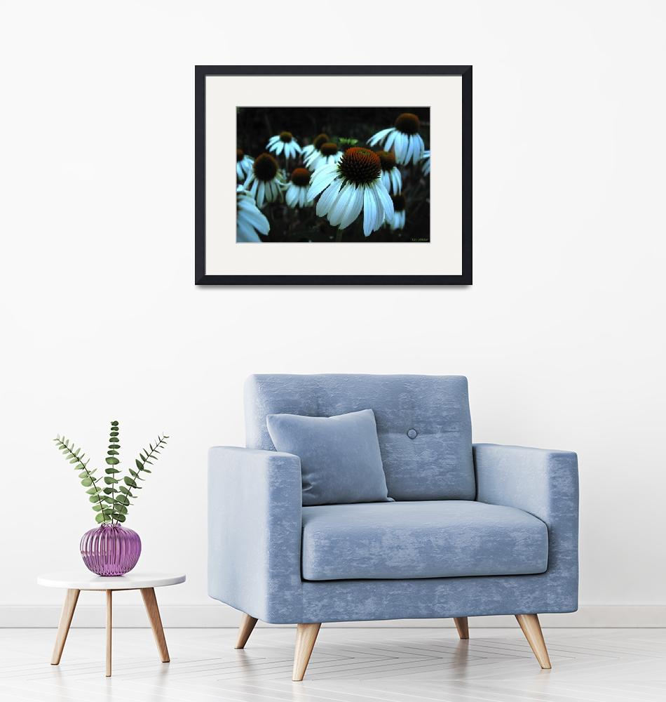 """""""White Coneflowers on Black"""" by TheCandidImage"""