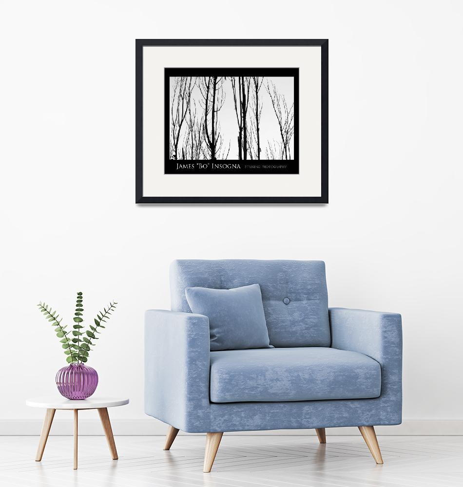 """""""Tree Branches Black and White  Abstract Poster""""  (2010) by lightningman"""