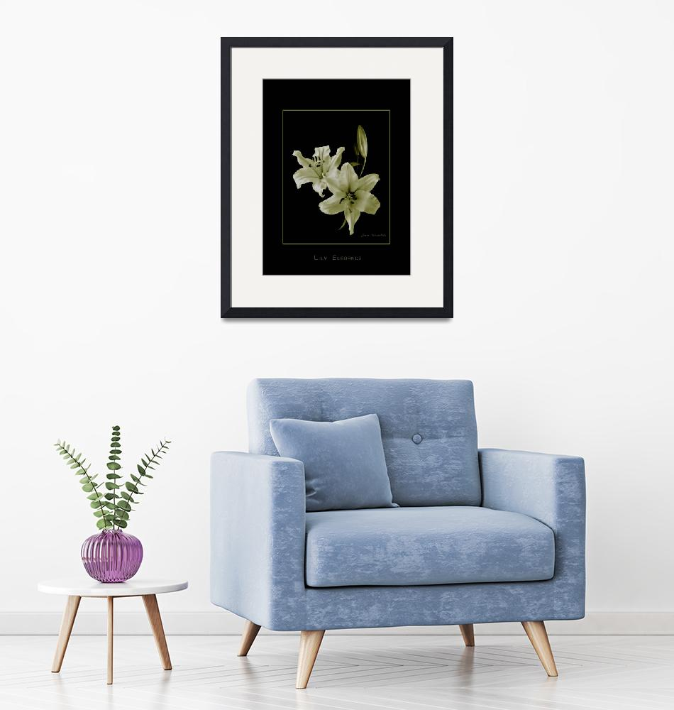 """""""Yellow Lilies on Black""""  (2008) by DocPixel"""