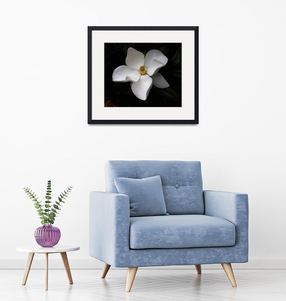 """""""Magnolia""""  by mtspace"""