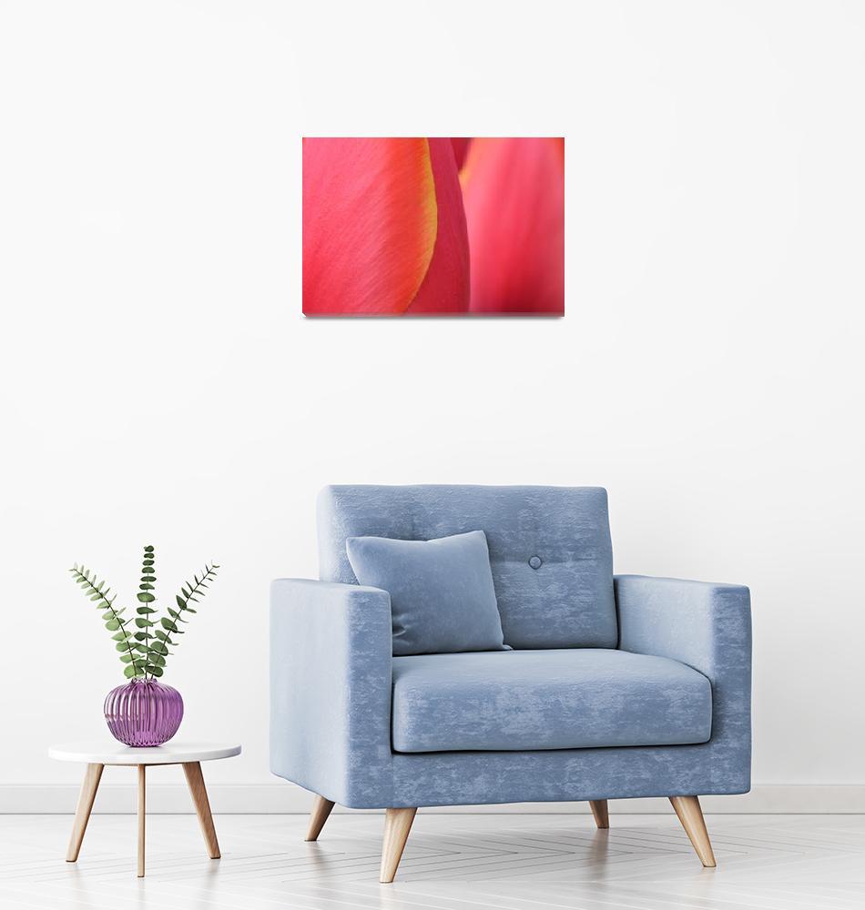 """""Pink Orange Yellow Tulip 20"" #20042315.0716 (5)""  (2015) by achimkrasenbrinkart"