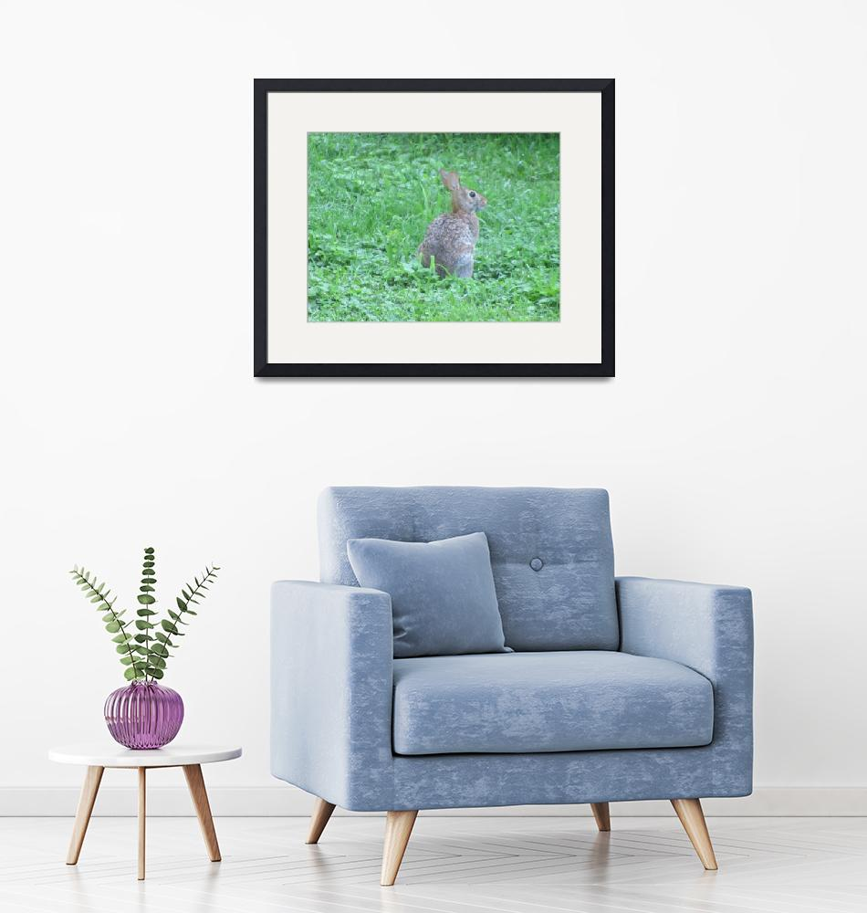"""""""Cottontail Rabbit""""  (2015) by Applesoft"""