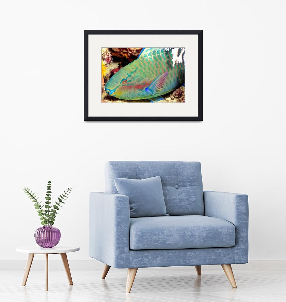 """""""Parrotfish Sleeping at Night""""  (1997) by JoaoPonces"""