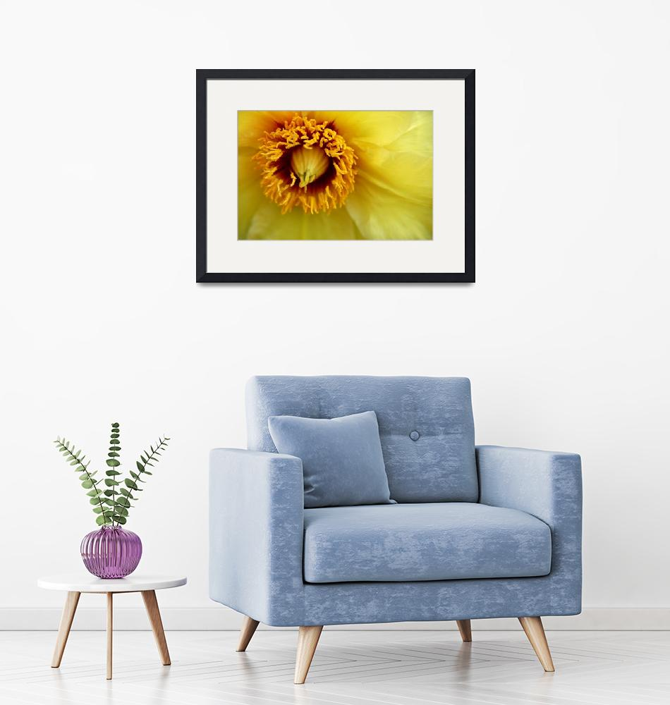 """""""Yellow Clematis""""  (2010) by BranchDesign"""