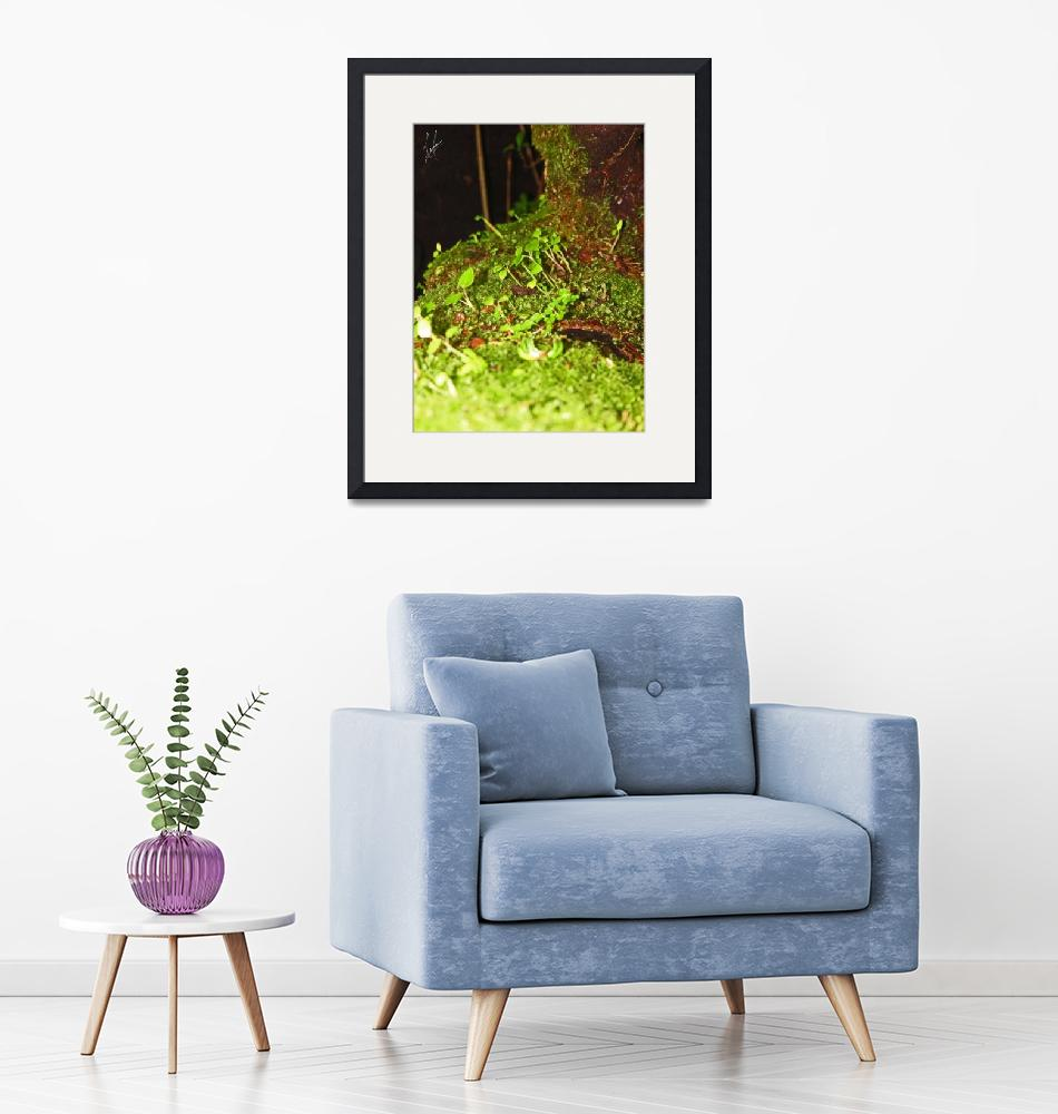 """""""Small Rainforest""""  (2014) by luis"""