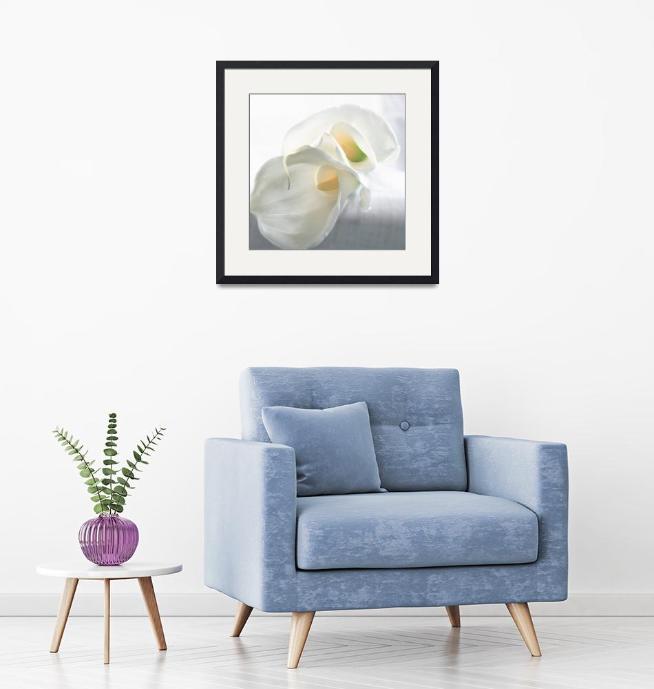 """""""Calla Lilly 4""""  (2006) by AnnaMiller"""