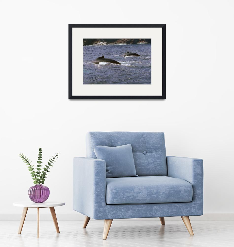 """Endangered Pair of Humpback Whales""  by ArtLoversOnline"