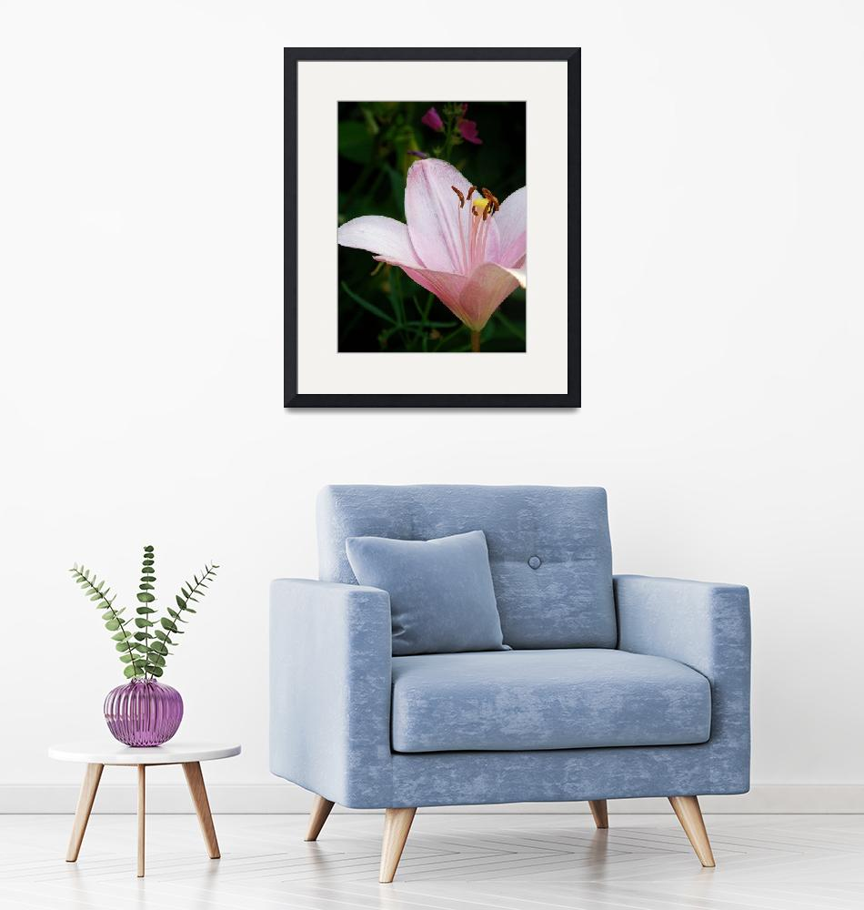 """""""Pink lily""""  (2009) by kalabart"""