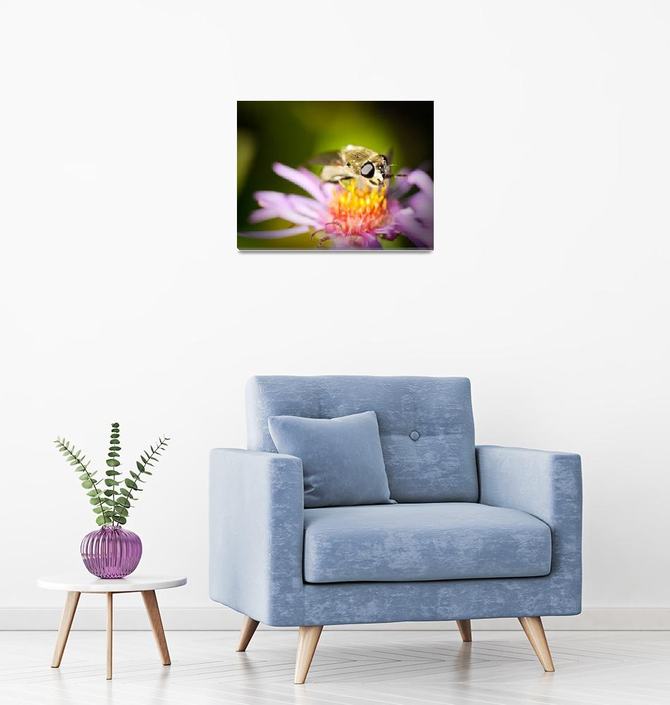 """""""Stinging Insect on Flower""""  (2011) by Amberwatsonwilliams"""
