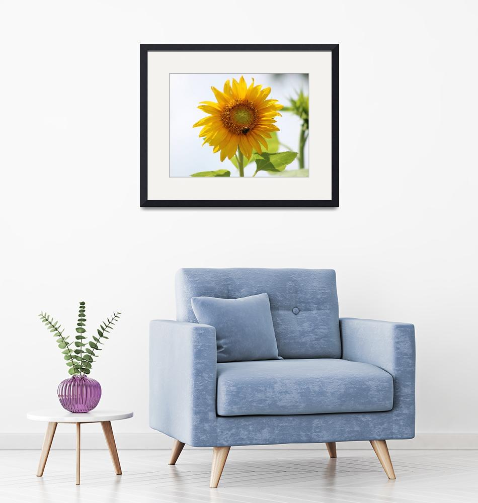 """""""Sunflower""""  (2019) by Once_Upon_A_Time_Nc"""