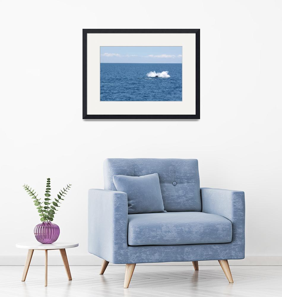 """""""NaP_ Whale Watching089""""  by nevilleprosser"""