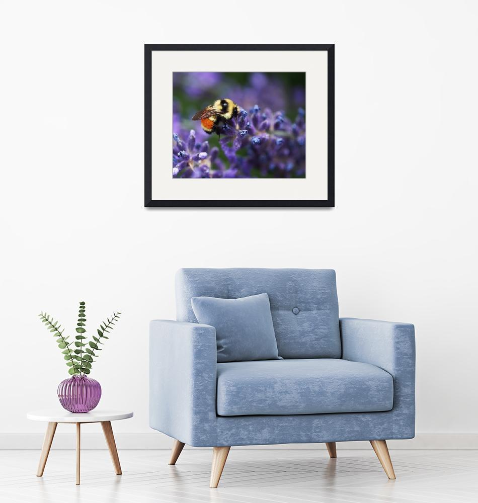 """""""Bumblebee on Lavender by Rona Black""""  (2013) by RonaBlack"""